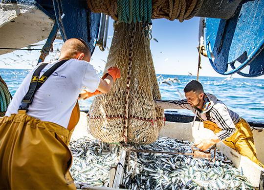 La Perle des Dieux - Vissersboot sardines Millésimées